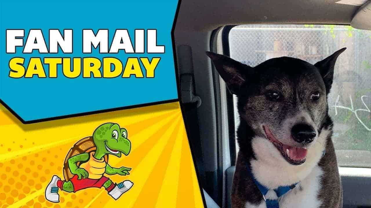 Savvy Turtle Fan Mail Saturday May 30 2020